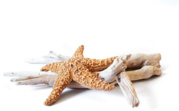 How to Prepare Driftwood for Crafts